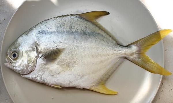 金鲳鱼的营养价值
