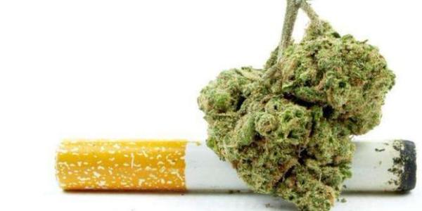 大麻仁酒的功效与作用