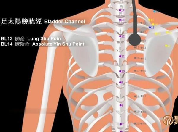 足太阳膀胱经的作用,足太阳膀胱经的走向