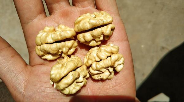 核桃是不是补脑子的,为什么核桃的形状像大脑
