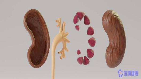 有什么办法可以养肾呢