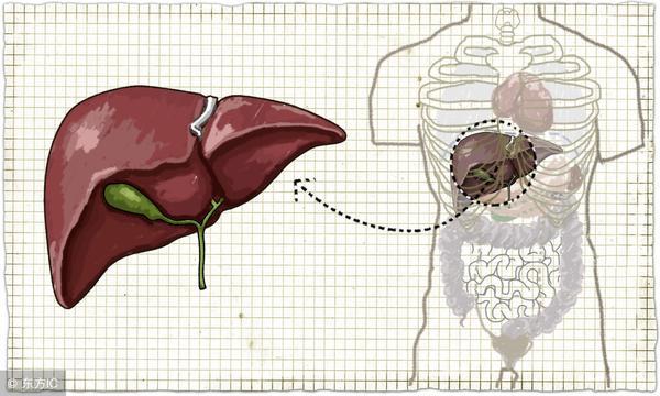 胆囊息肉原因