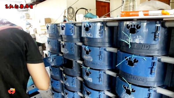 青蟹可以用自来水养吗,海蟹要放盐养吗