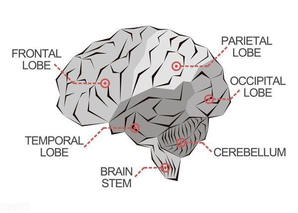 脑挫伤多久能恢复