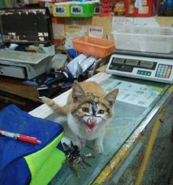 最爱撒娇的猫咪玩倒立咬笔头 主人电脑比我好看吗