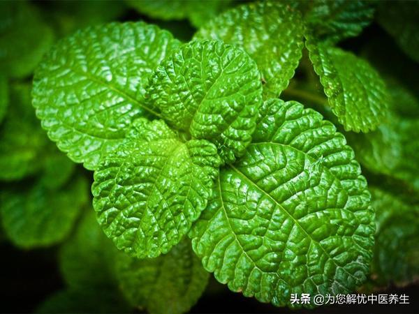 二陈加山栀黄连生姜汤的功效与作用