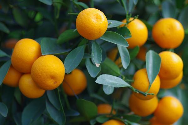 橘皮茯苓丸的功效与作用