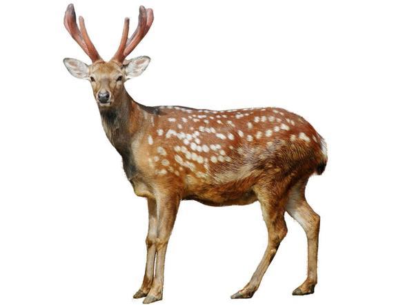 鹿茸补涩丸的功效与作用
