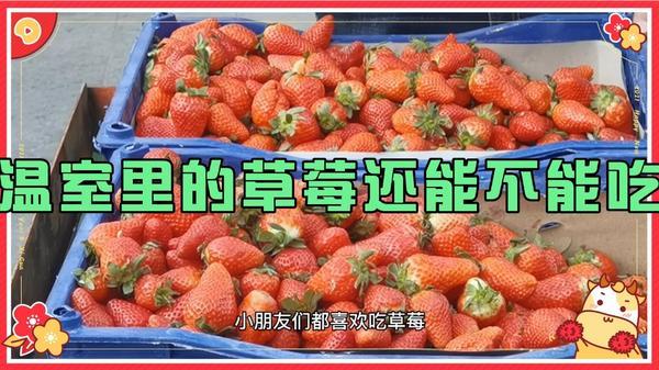 吃草莓中毒怎么办,吃草莓中毒了怎么办,草莓中毒怎么办