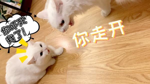 激萌女团Lunar现身山口山战记荧幕代言人海选