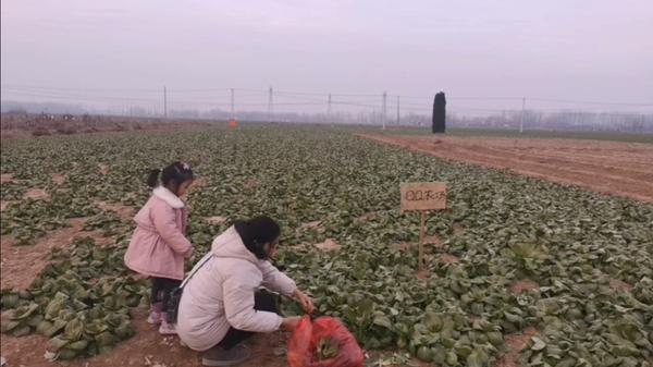 QQ农场油菜怎么种植 QQ农场油菜种植方法介绍