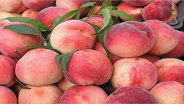 桃子常温下可以放几天,桃子怎样存放3个月