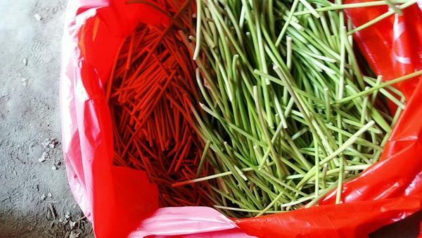 蒜苔可以晒干吗,蒜苔干怎么做好吃又简单