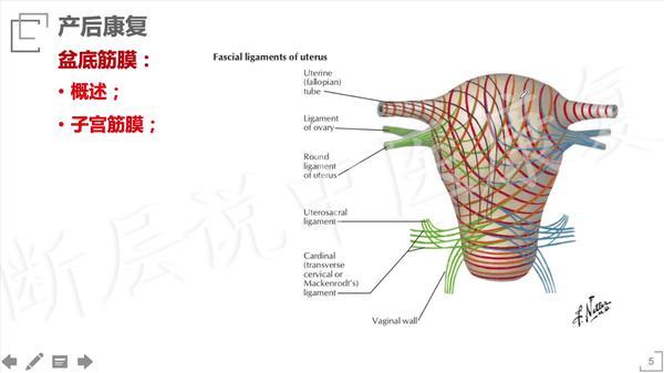 产后如何锻炼盆底肌肉,产后如何锻炼盆底肌,产后怎么锻炼盆底肌