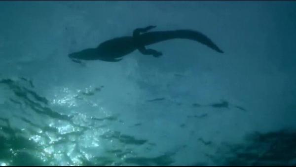 大航海之路尼罗鳄在哪里可以找到