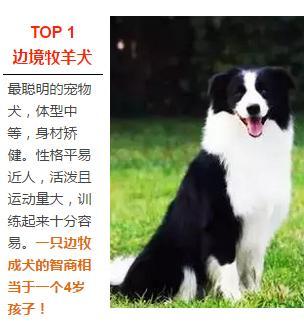 宠物犬图片品种