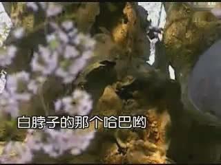 代保建快板书《耶稣赶鬼》-娱乐-高清完整正版视频在线观看-优酷