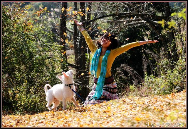 南雄银杏之约:在帽子峰林场,写下秋天的童话