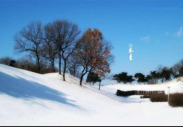 冬至的图片大全