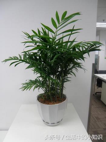 室内植物摆放大全名字和图片
