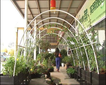 陽臺多層架子種菜圖片