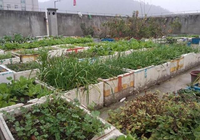 家庭樓頂菜園圖片