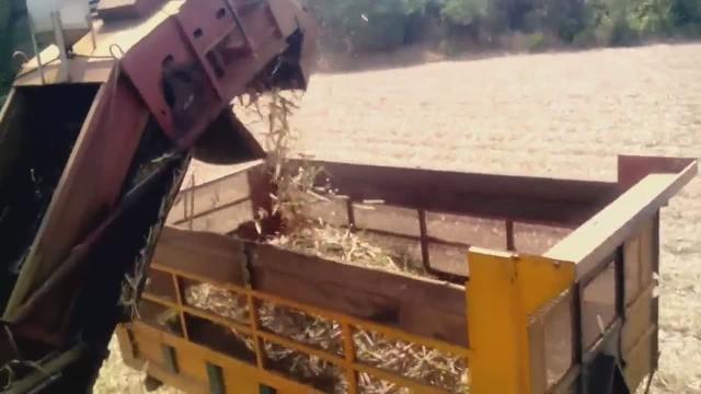 收割机老司机视角,看甘蔗收割作业