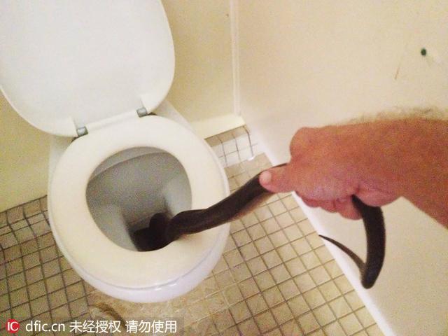 黄金蟒蛇图片大全大图