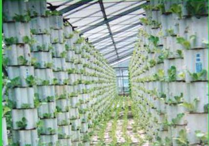教你如何自己建造一个简单、便宜的温室大棚