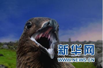 动物图集:大海与海鸟