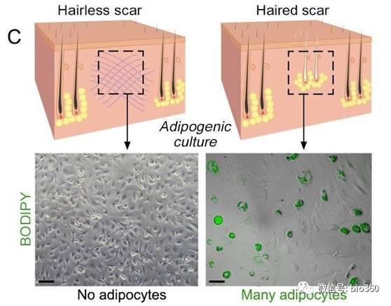 聚酯纤维布料图片