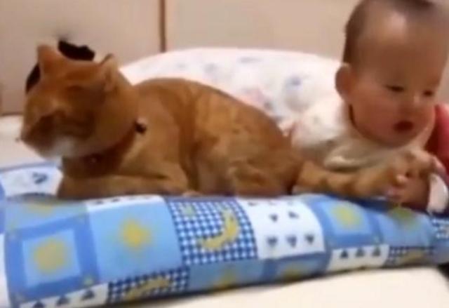 宝宝对猫咪又揪又咬,猫咪竟然毫不反抗,网友:这才是真爱啊!