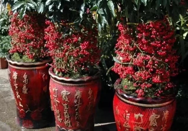 花卉图片大全100种