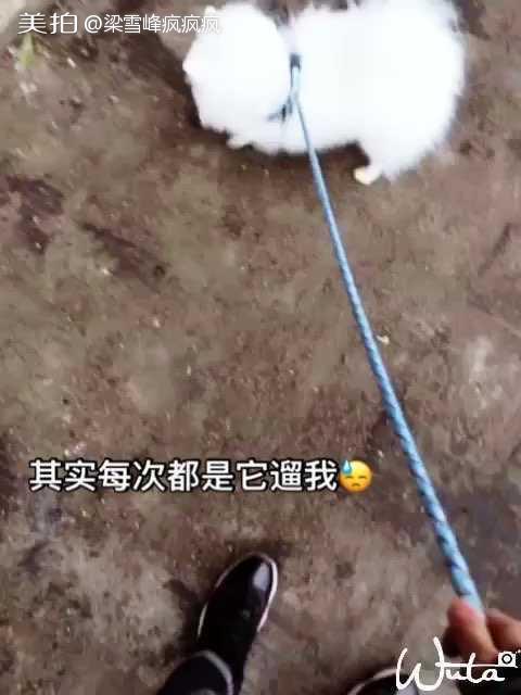 阿姨抱狗的视频