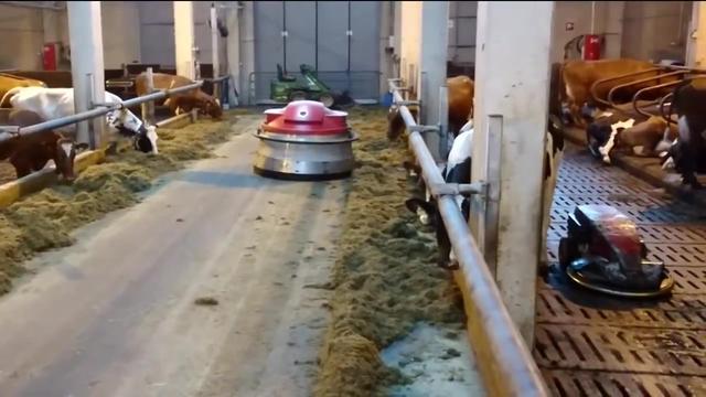 国外的养牛场,全程现代机械化养殖,还专门设小房子给奶牛晒太阳