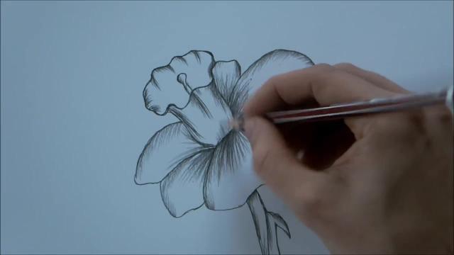 素描简笔画花