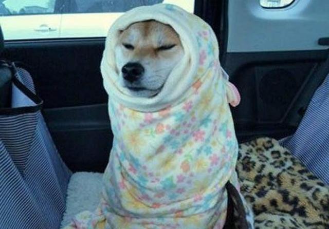 情人节又怎样,单身狗还是学会如何裹紧自己的小被子吧