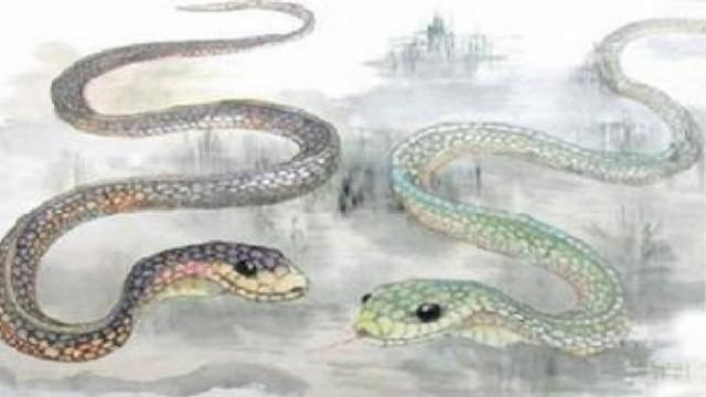 屬蛇的今年的財運如何
