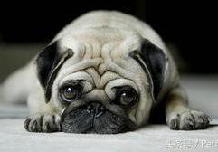 宠物狗小型品种名字