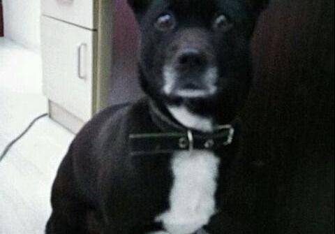 长耳朵狗是什么品种