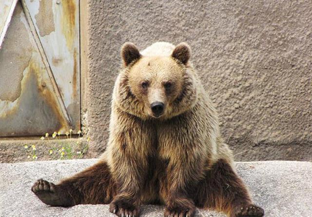 关于熊大熊二简笔画图片大全_可可