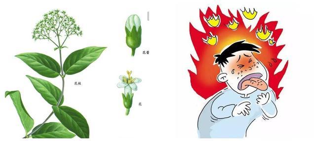 【word】 广东省耳草属药用植物资源- 豆丁网