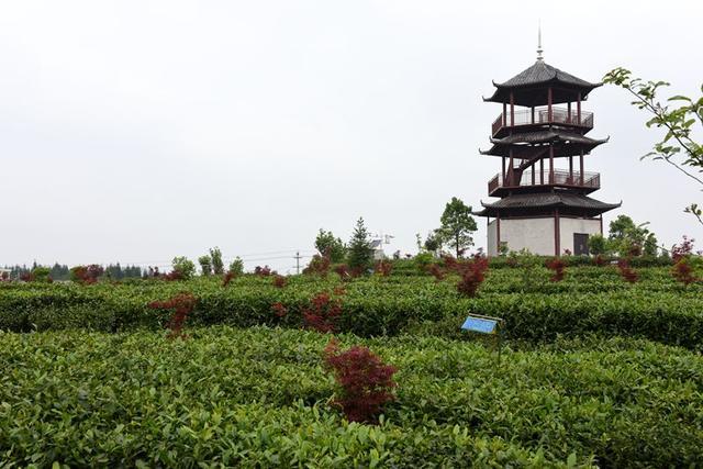 贵州红枫集鸽7975羽率先封棚(图)-中国信鸽信息网