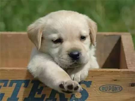 狗狗品种大全及图片-萌宠乐园