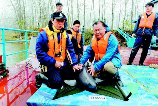 持续多年努力终于取得明显成效 长江湖北段江豚数量上升