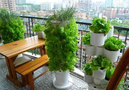 在阳台上这样种菜,只要一根PVC管,全家人都吃不完!