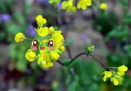 小花袄表情包