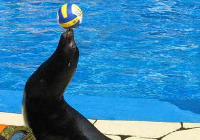 海豹海狮海象