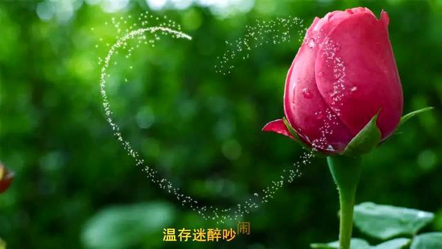 许嵩《玫瑰花的葬礼》好听好听!无尽的回忆!