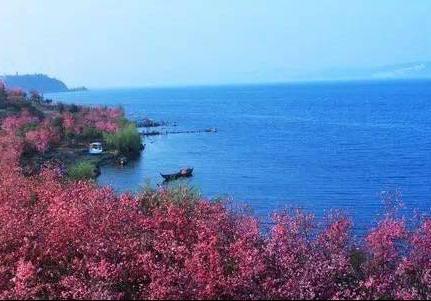 廣州哪里有櫻花